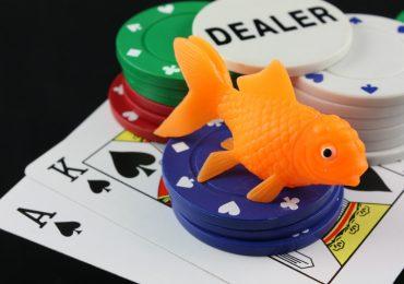 Рыба в покере – как её искать?